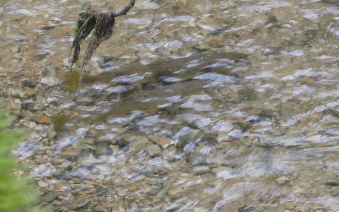 Le point sur nos cours d'eau à fin janvier :