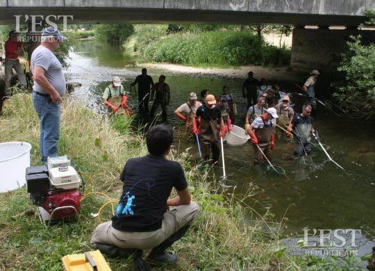 Pêches électriques dans le Doubs à Bremoncourt le 08 septembre.